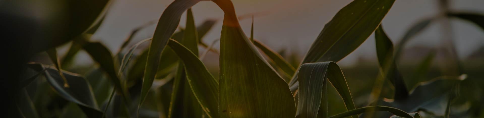 Cambios en la normativa de agricultura ecológica