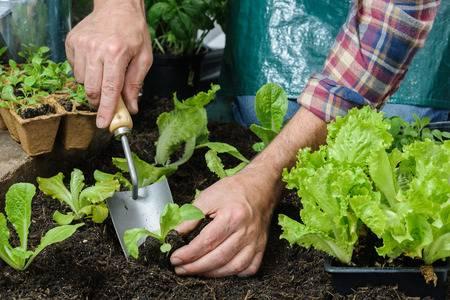 hortalizas siembra